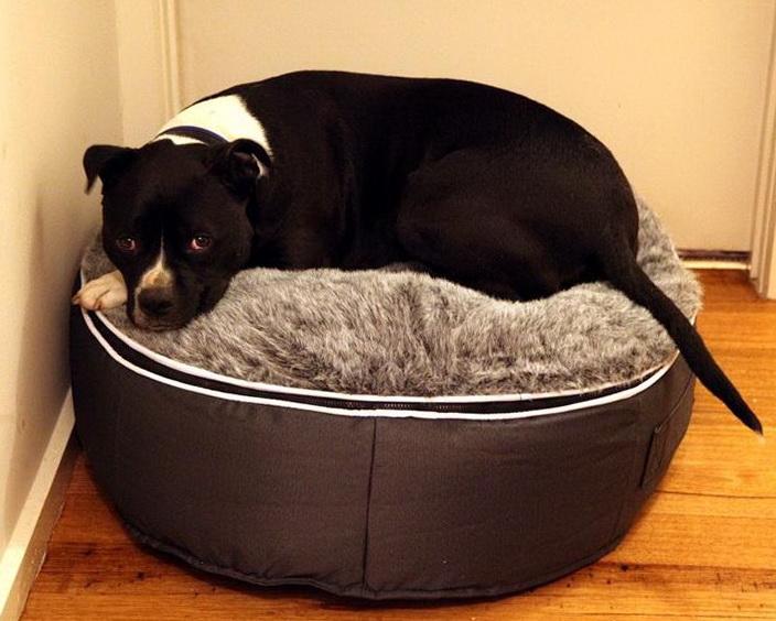 Best Dog Beds 2013