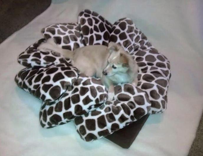 Best Dog Beds Ever