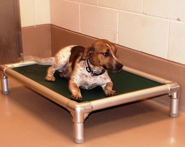 Chew Proof Dog Bed Amazon