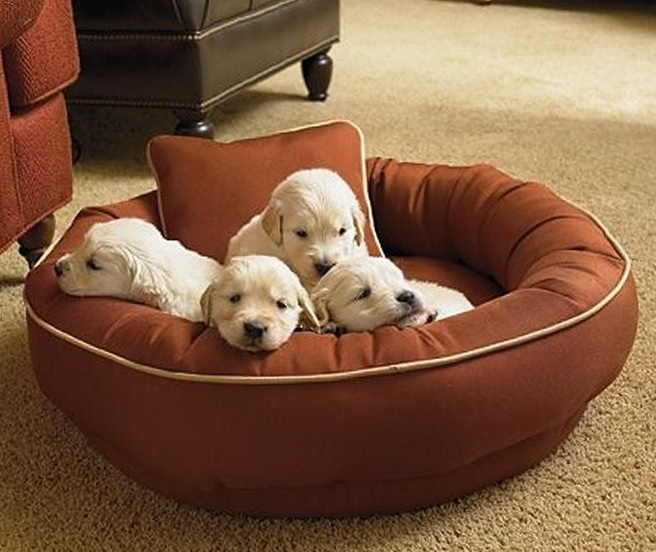 Chew Proof Dog Bed Petsmart Beds 3775 Home Design Ideas