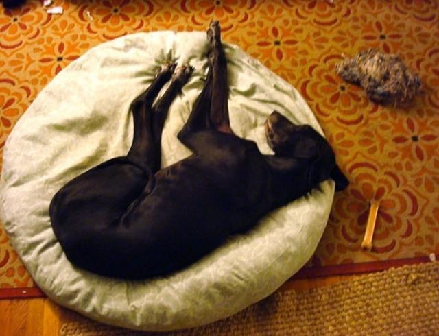 Diy Dog Bed Pinterest