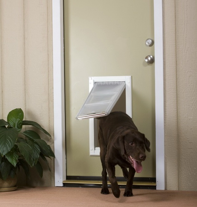 Electronic Dog Door Review