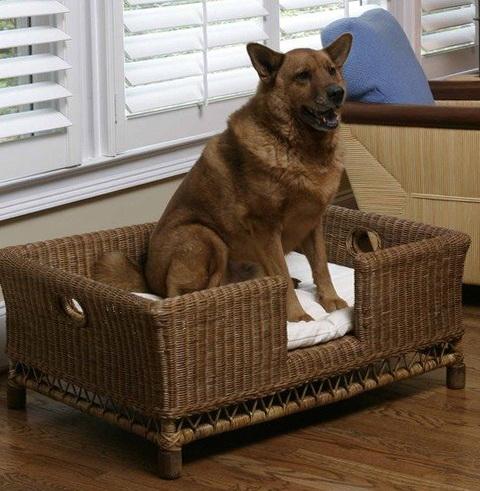 Extra Large Dog Beds Walmart