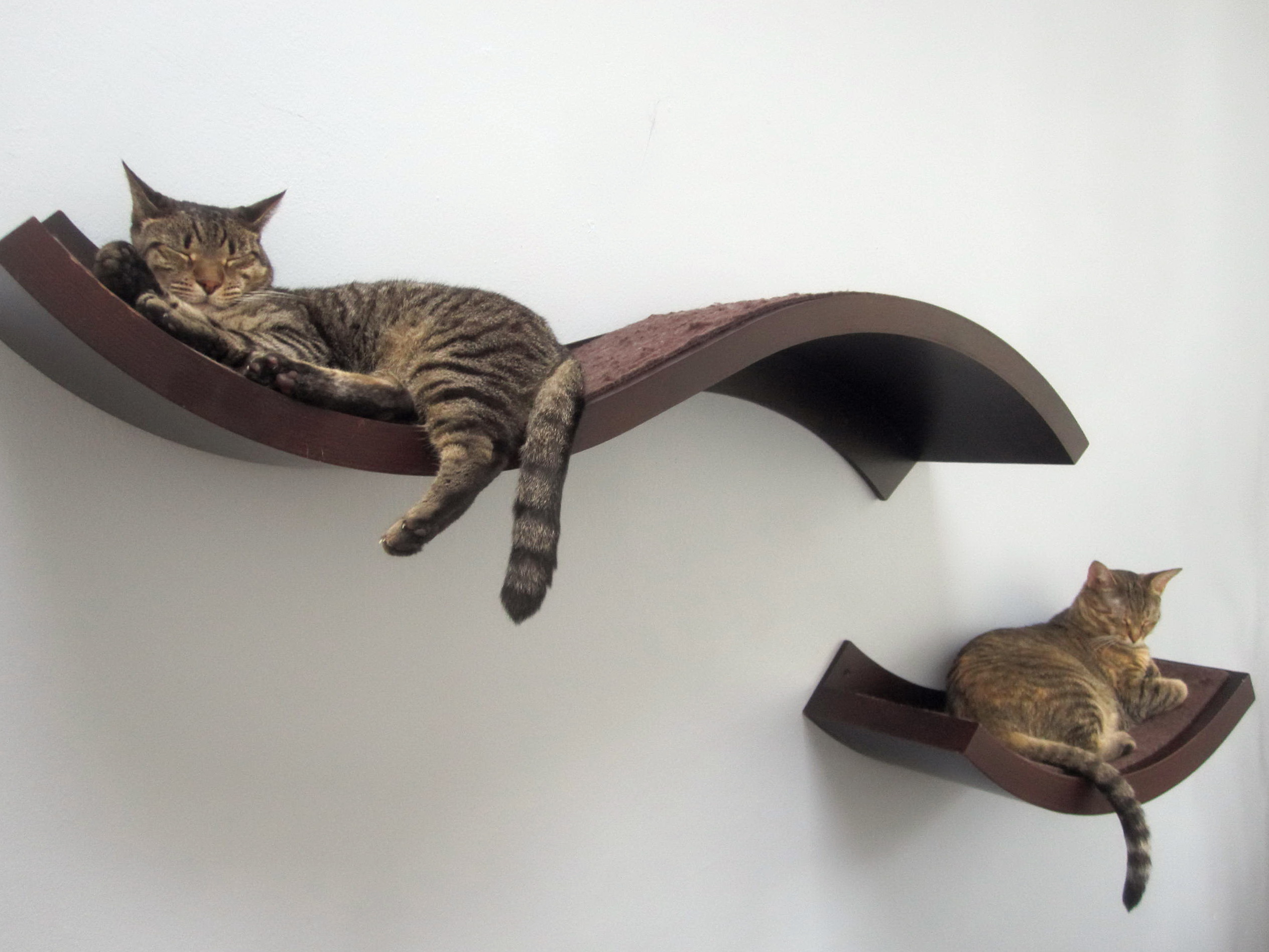Cat Shelves For Walls