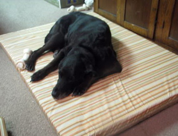 Homemade Large Dog Beds