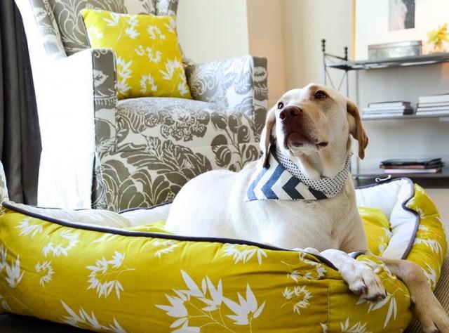 Luxury Dog Beds Amazon