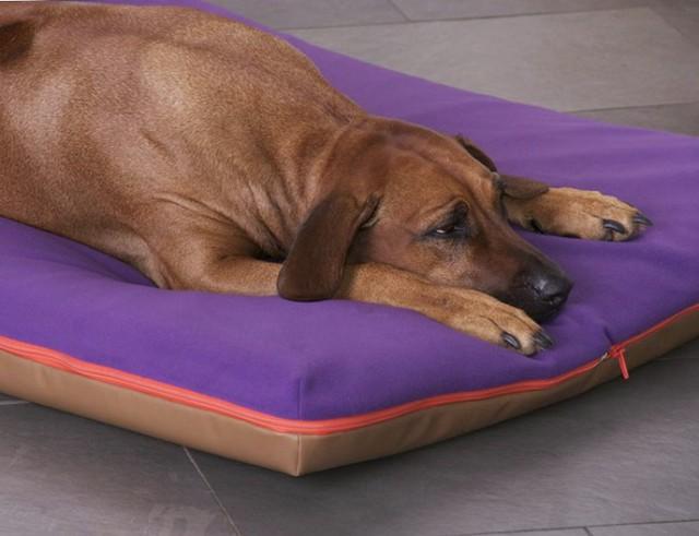 Memory Foam Dog Bed Australia