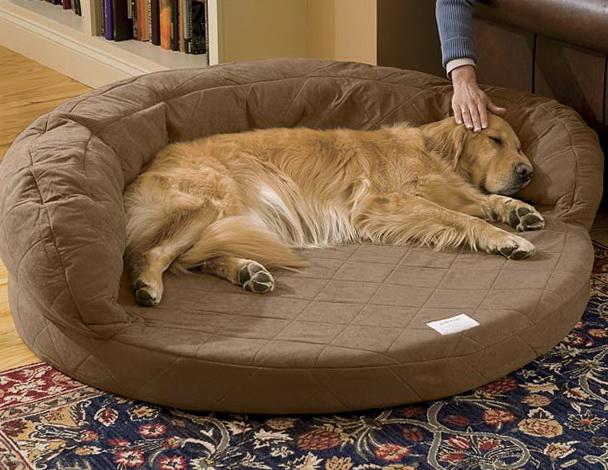 Orthopedic Dog Bed Uk