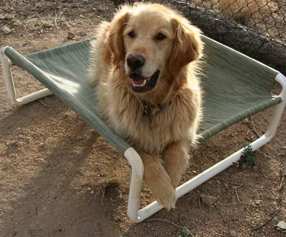 Raised Outdoor Dog Bed