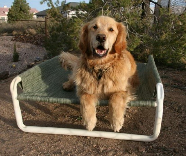 Dog Bunk Beds For Sale
