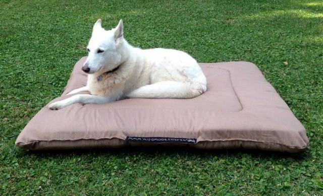 Heated Pet Beds South Africa