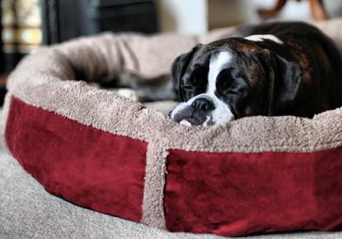 Small Dog Beds Amazon