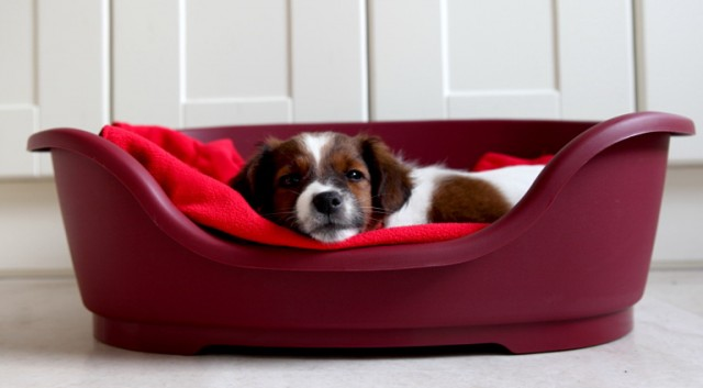 Small Dog Beds For Sale